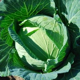 1-15.11.14 菜園-5.jpg