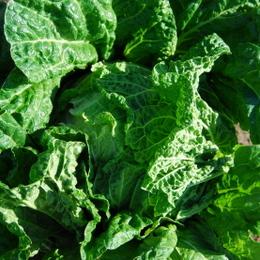 1-15.11.14 菜園-6.jpg