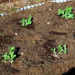 1-15.11.14 菜園-8.jpg