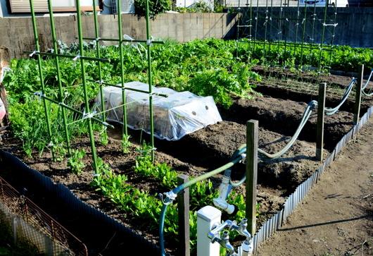 1-15.12.04 菜園-1.jpg