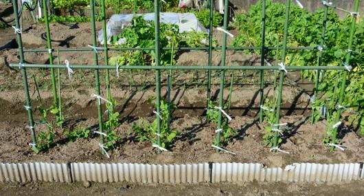 1-15.12.04 菜園-9.jpg