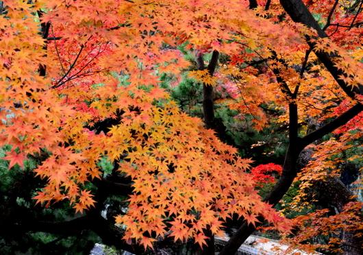 1-15.12.06 和歌山(城)公園紅葉-3.jpg