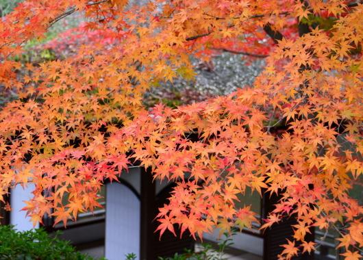 1-15.12.06 和歌山(城)公園紅葉-4.jpg