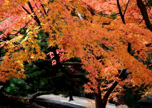 1-15.12.06 和歌山(城)公園紅葉-6.jpg