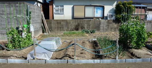 1-16.03.01 菜園全景.jpg