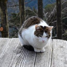 1-16.03.16 4番 施福寺猫.jpg