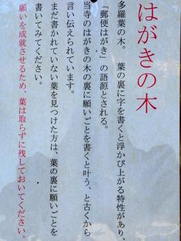 1-16.03.30 番外 法起院多羅葉樹.解説.jpg