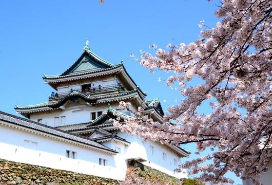 1-16.04.02 城内桜-1.jpg