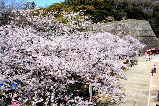1-16.04.02 城内桜-4.jpg