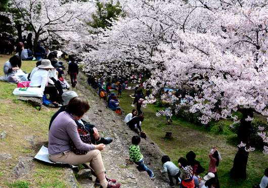 1-16.04.02 城内桜-8.jpg