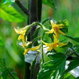 1-16.05.26 家庭菜園-4.jpg