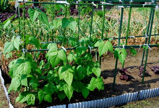1-16.05.26 家庭菜園-7.jpg
