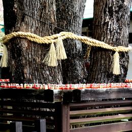 1-16.05.29 23番 勝尾寺境内のダルマ-1.jpg