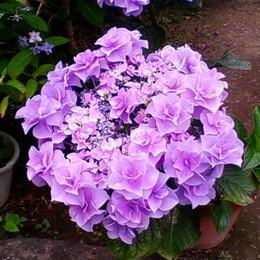 1-16.06.07 紫陽花-7.jpg
