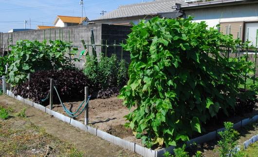 1-16.06.23 菜園全景.jpg