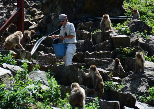 1-16.07.15 野猿公苑-2.jpg
