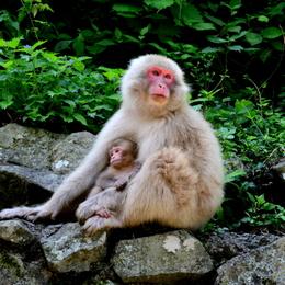 1-16.07.15 野猿公苑-3.jpg