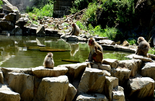 1-16.07.15 野猿公苑-5.jpg