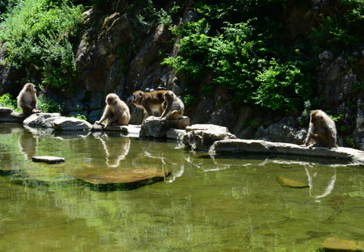 1-16.07.15 野猿公苑-6.jpg