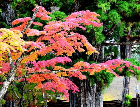 1-16.11.12 金剛峯寺周辺の紅葉-2.jpg