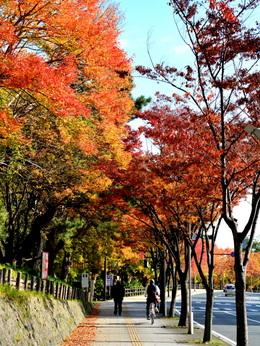 1-16.11.18 和歌山城公園の紅葉-2.jpg