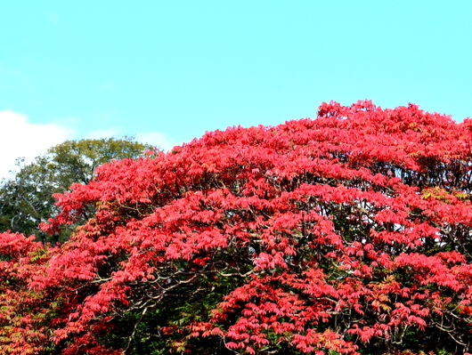 1-16.11.18 和歌山城公園の紅葉-7.jpg