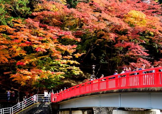 1-16.11.26 香嵐渓の紅葉-3.jpg