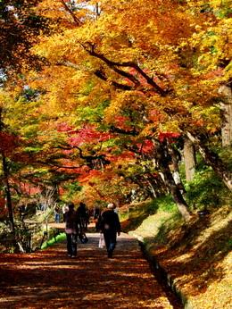 1-16.11.26 香嵐渓の紅葉-8.jpg