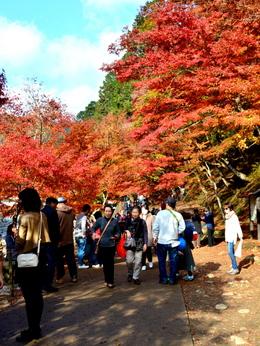 1-16.11.28 香嵐渓の紅葉-10.jpg