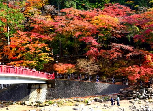 1-16.11.28 香嵐渓の紅葉-11.jpg