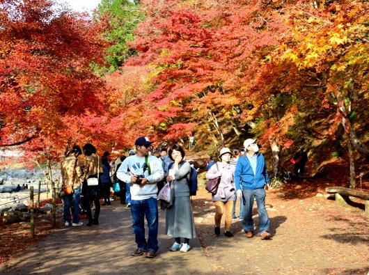 1-16.11.28 香嵐渓の紅葉-7.jpg