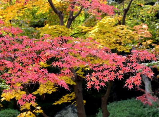 1-16.12.05 紅葉渓庭園-2.jpg