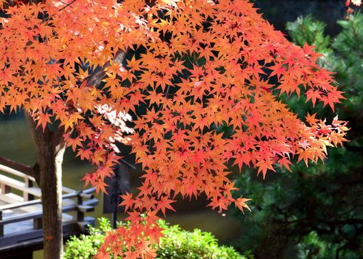 1-16.12.05 紅葉渓庭園-7.jpg