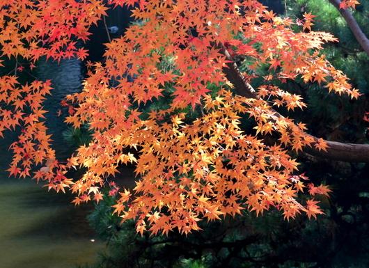 1-16.12.05 紅葉渓庭園-8.jpg