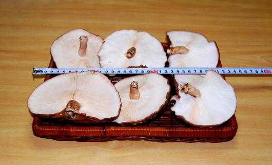 1-16.12.11 椎茸-3.jpg