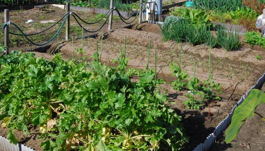 1-16.12.14 菜園-1.jpg