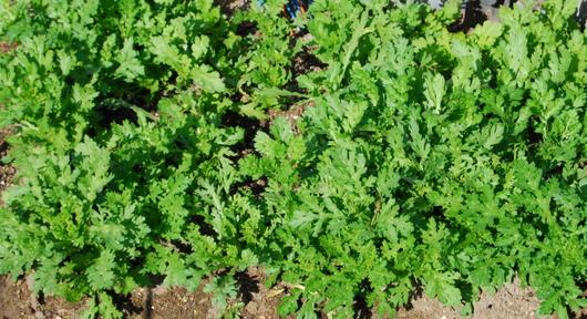 1-16.12.14 菜園-5.jpg
