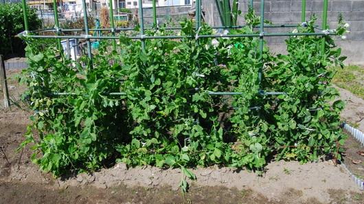 1-17.03.02 菜園-2.jpg