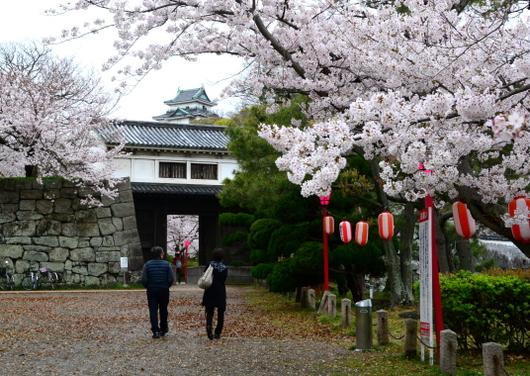 1-17.04.09 城内桜-1.jpg