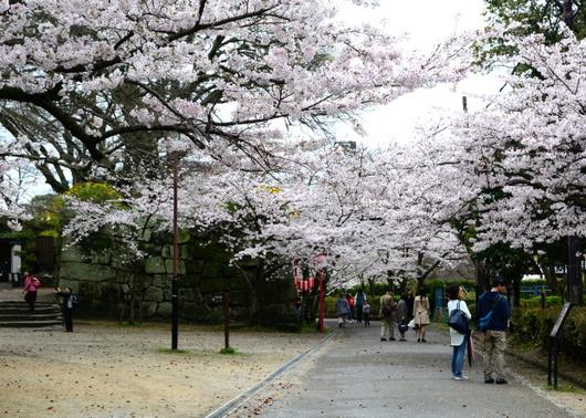 1-17.04.09 城内桜-8.jpg