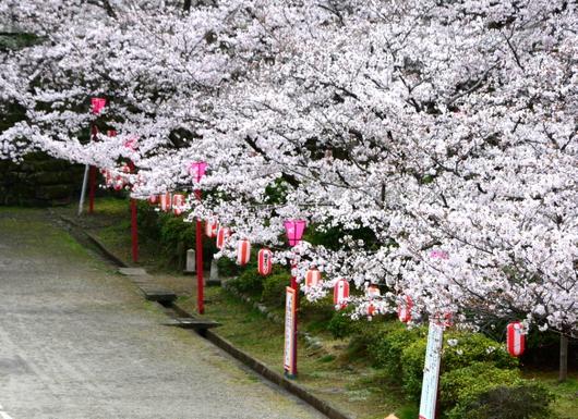 1-17.04.12 桜.jpg