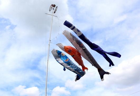 1-17.05.03 鯉のぼり.jpg