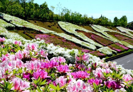 1-17.05.15 四季の郷公園のバラ-1.jpg
