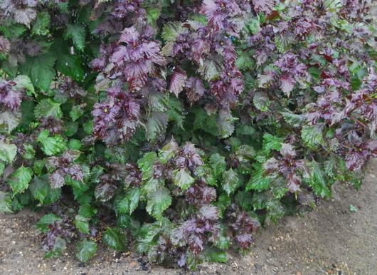 1-17.09.21 菜園-9.jpg