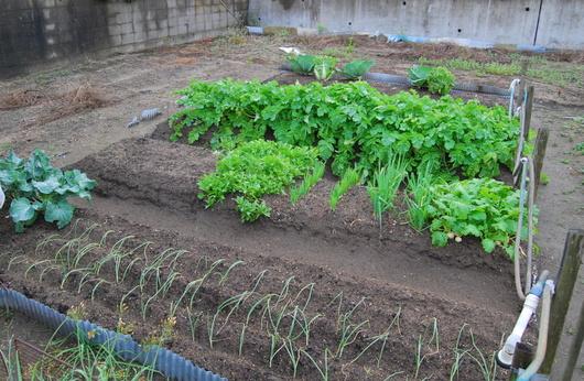 1-17.11.16 菜園-1.jpg