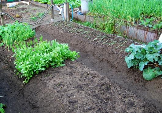 1-17.11.16 菜園-2.jpg