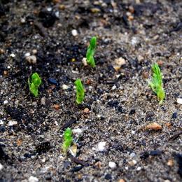 1-17.11.16 菜園-3.jpg