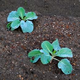 1-17.11.16 菜園-4.jpg