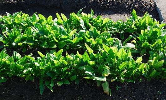 1-17.11.16 菜園-5.jpg