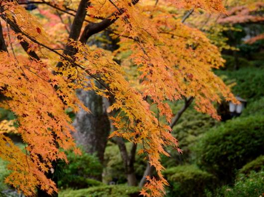 1-17.11.28 和歌山城公園の紅葉-10.jpg
